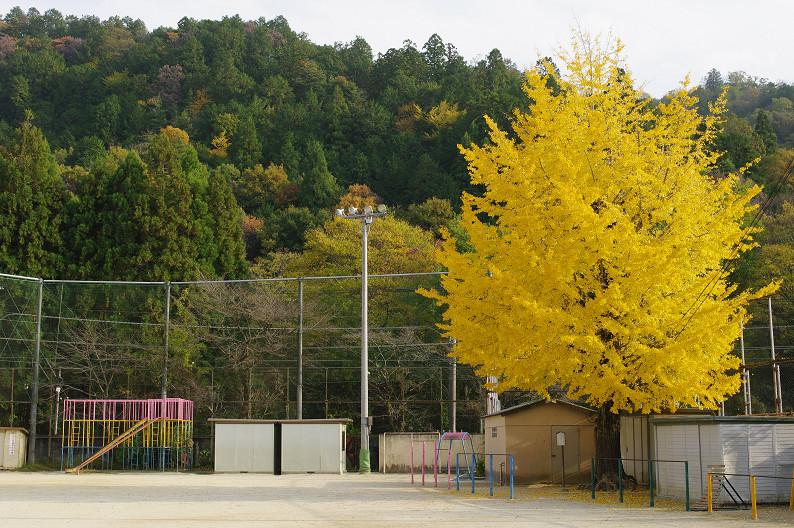 京都の紅葉2010 ~叡山電車・二ノ瀬駅~    と..._f0152550_2218167.jpg