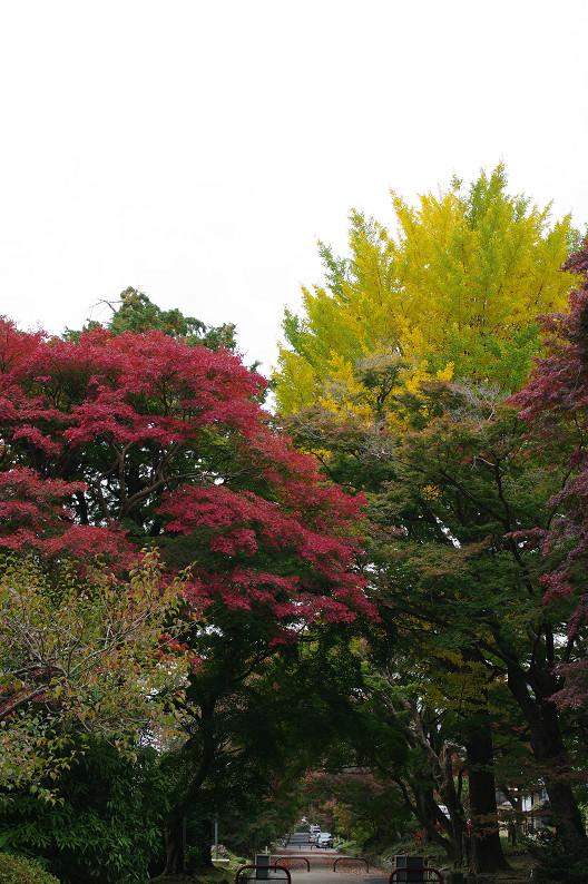 京都の紅葉2010 ~叡山電車・二ノ瀬駅~    と..._f0152550_22183528.jpg