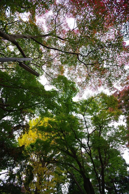 京都の紅葉2010 ~叡山電車・二ノ瀬駅~    と..._f0152550_22184684.jpg