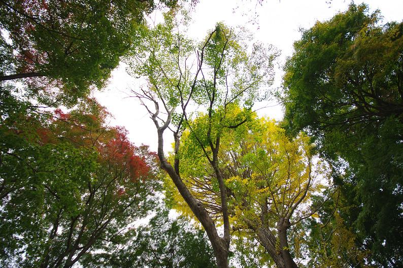 京都の紅葉2010 ~叡山電車・二ノ瀬駅~    と..._f0152550_22191381.jpg