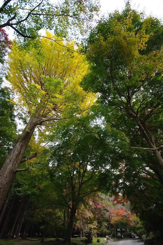 京都の紅葉2010 ~叡山電車・二ノ瀬駅~    と..._f0152550_22191884.jpg