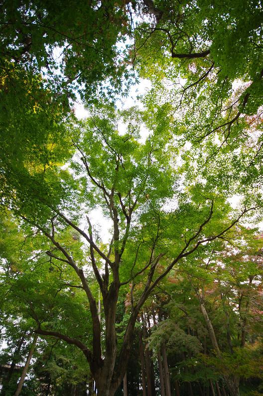 京都の紅葉2010 ~叡山電車・二ノ瀬駅~    と..._f0152550_22192100.jpg