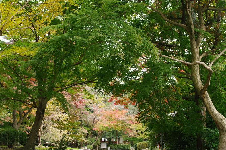 京都の紅葉2010 ~叡山電車・二ノ瀬駅~    と..._f0152550_22192550.jpg