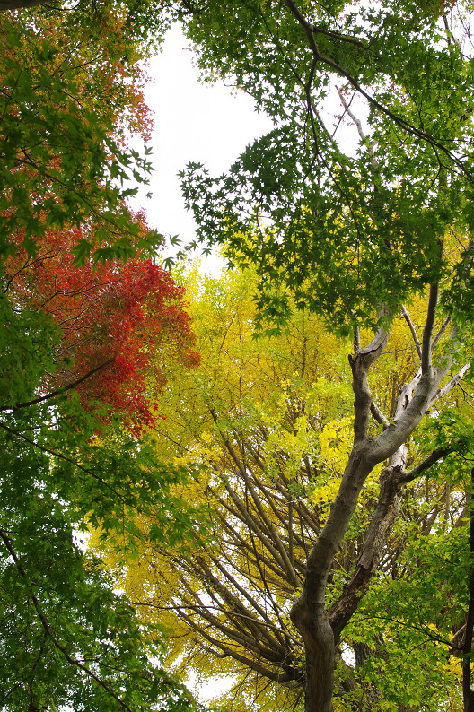 京都の紅葉2010 ~叡山電車・二ノ瀬駅~    と..._f0152550_22193563.jpg