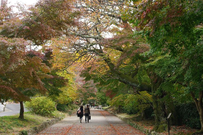 京都の紅葉2010 ~叡山電車・二ノ瀬駅~    と..._f0152550_22195189.jpg
