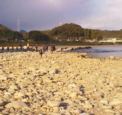 11月9日 涸れた今川を見る会-3_f0197754_1173826.jpg