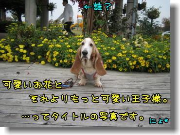 f0204072_1218253.jpg