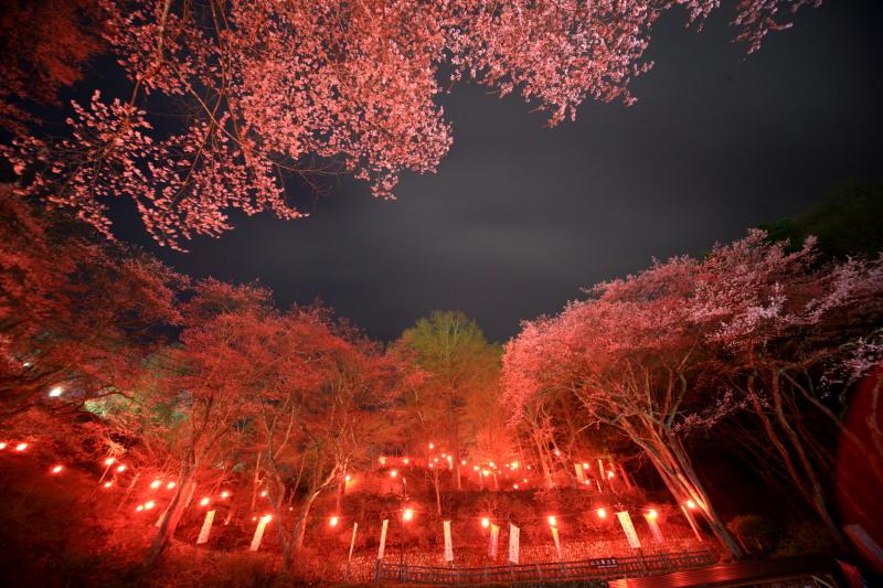桜_f0075075_12184955.jpg