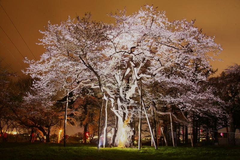 桜_f0075075_1221108.jpg