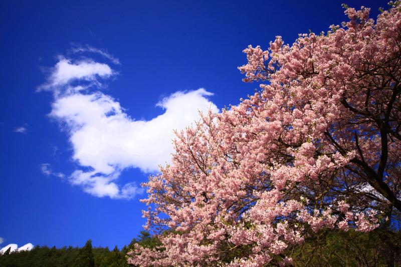 桜_f0075075_12432770.jpg