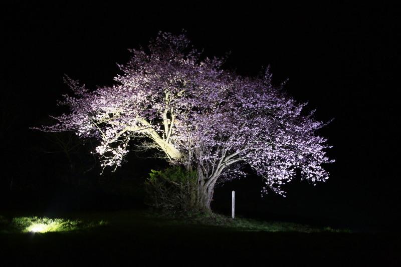 桜_f0075075_1247147.jpg