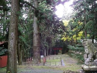 神渕神社の大杉_e0064783_1015762.jpg
