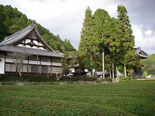 神渕神社の大杉_e0064783_10161389.jpg