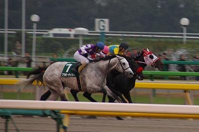 武蔵野S(GIII)は、グロリアスノアが重賞2勝目、戸崎圭太騎手は中央重賞初制覇_b0015386_2354255.jpg