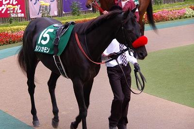 武蔵野S(GIII)は、グロリアスノアが重賞2勝目、戸崎圭太騎手は中央重賞初制覇_b0015386_23544291.jpg