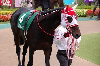 武蔵野S(GIII)は、グロリアスノアが重賞2勝目、戸崎圭太騎手は中央重賞初制覇_b0015386_23554248.jpg