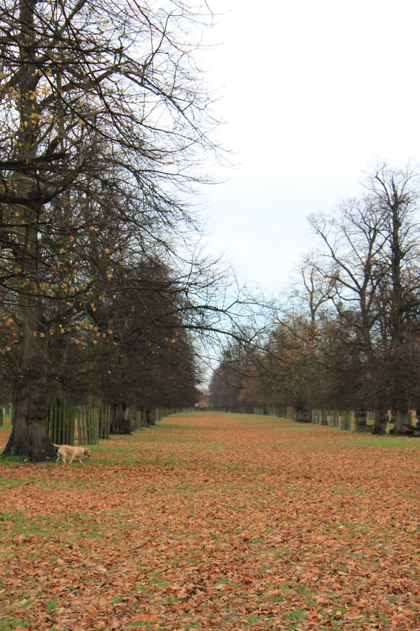 バースデー散歩 in Bushy Park_a0137487_147617.jpg
