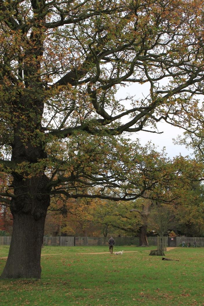 バースデー散歩 in Bushy Park_a0137487_1482738.jpg