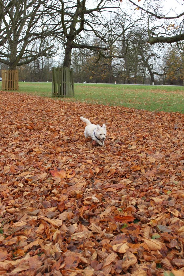 バースデー散歩 in Bushy Park_a0137487_1524853.jpg