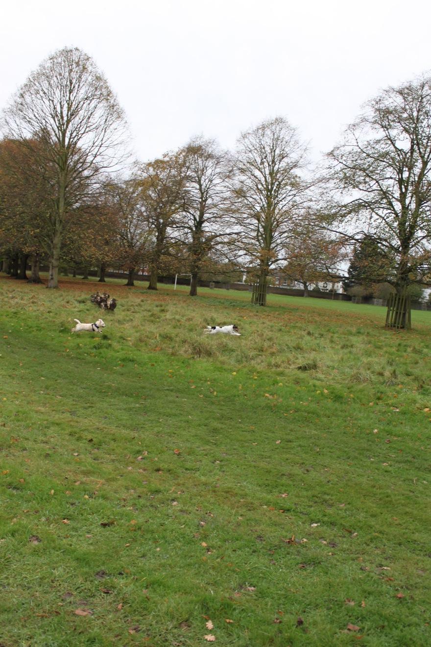バースデー散歩 in Bushy Park_a0137487_23444.jpg