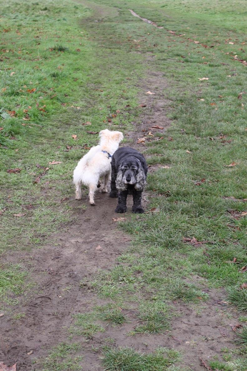 バースデー散歩 in Bushy Park_a0137487_245687.jpg