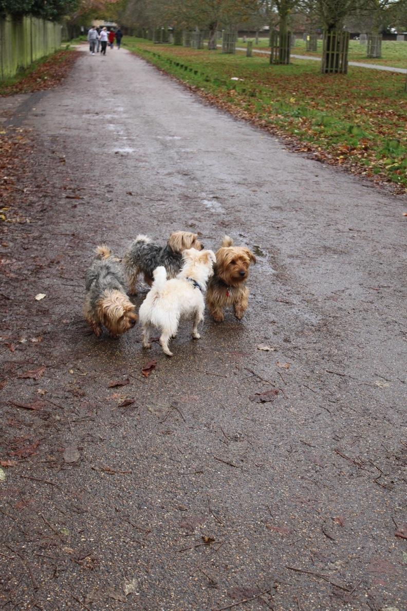 バースデー散歩 in Bushy Park_a0137487_255525.jpg