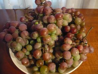 葡萄の収穫_c0203401_10542748.jpg