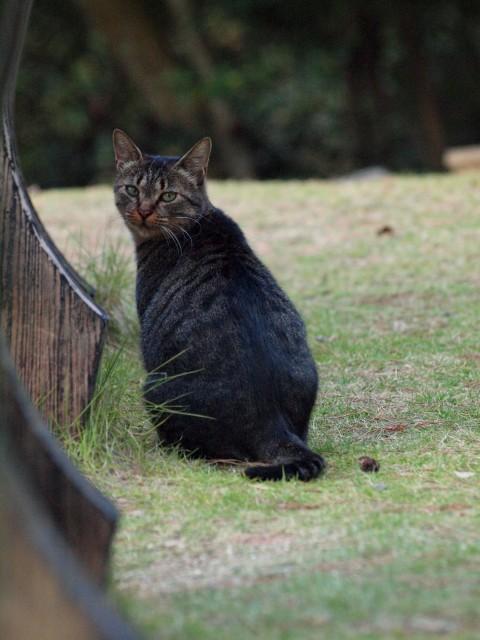猫散策 #3_e0074308_20443725.jpg