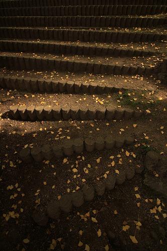 季節の階段・・・_a0122544_1805641.jpg