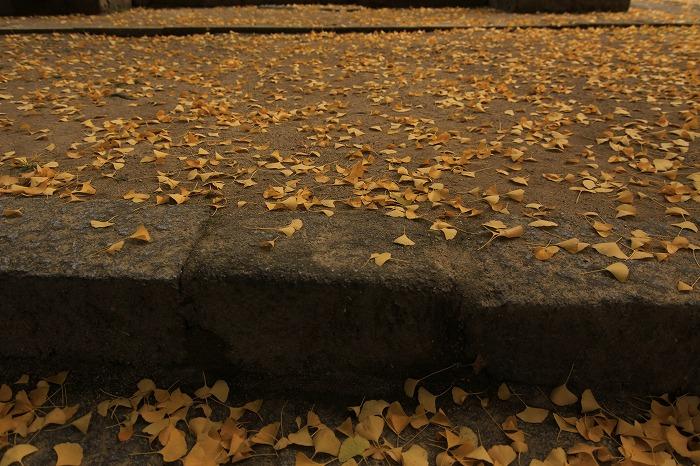 季節の階段・・・_a0122544_1811912.jpg