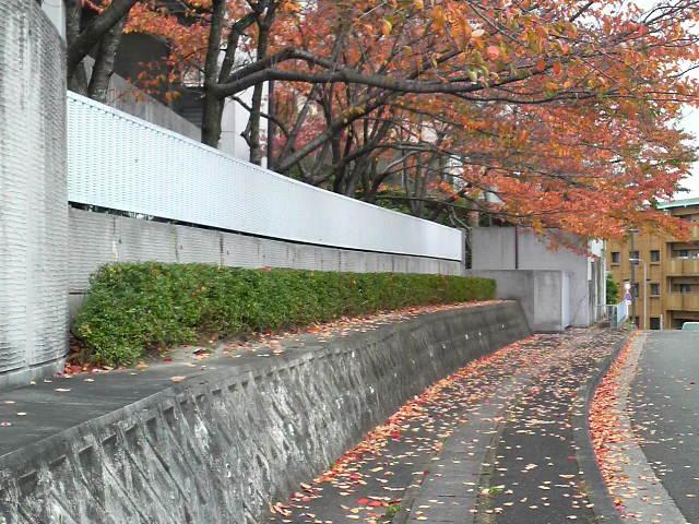紅葉桜_c0185356_112469.jpg