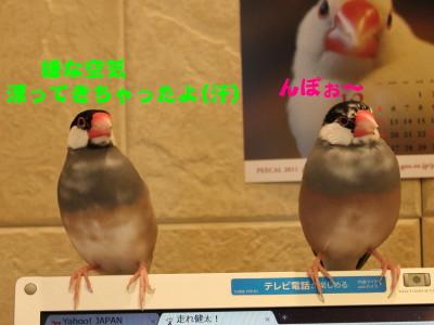 b0158061_2027999.jpg