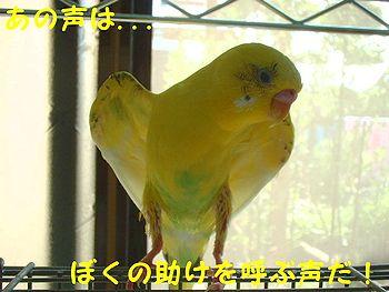 f0196665_06550.jpg