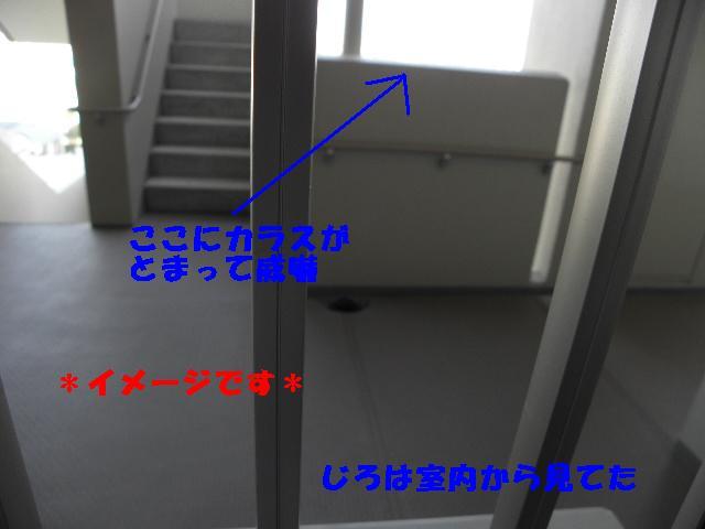 e0216469_9353763.jpg