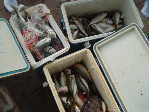 つばきマリーナ秋季釣り大会_a0077071_15415066.jpg