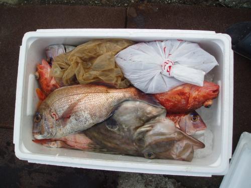 つばきマリーナ秋季釣り大会_a0077071_1545844.jpg