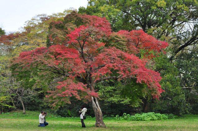 美しい季節に入りました_a0126590_5441197.jpg