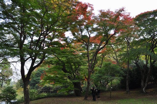 美しい季節に入りました_a0126590_5465659.jpg