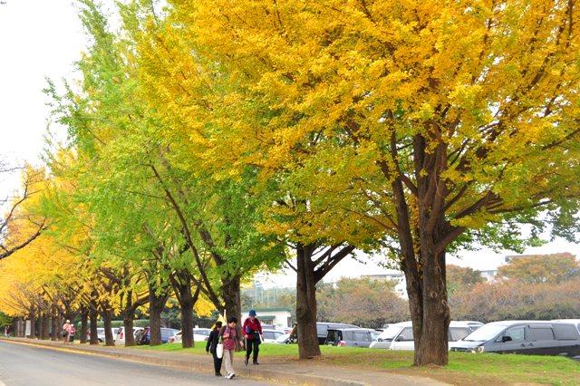 美しい季節に入りました_a0126590_5482647.jpg
