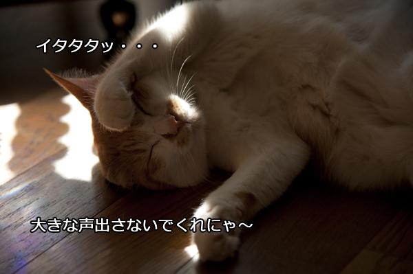 b0141397_22492476.jpg