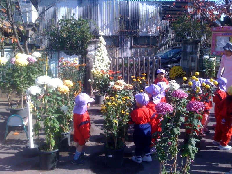 奉納菊花が園庭に来ました!子供達が集まります!_b0188106_14473929.jpg