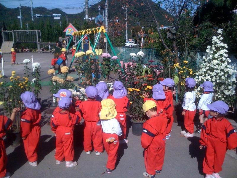 奉納菊花が園庭に来ました!子供達が集まります!_b0188106_14473958.jpg