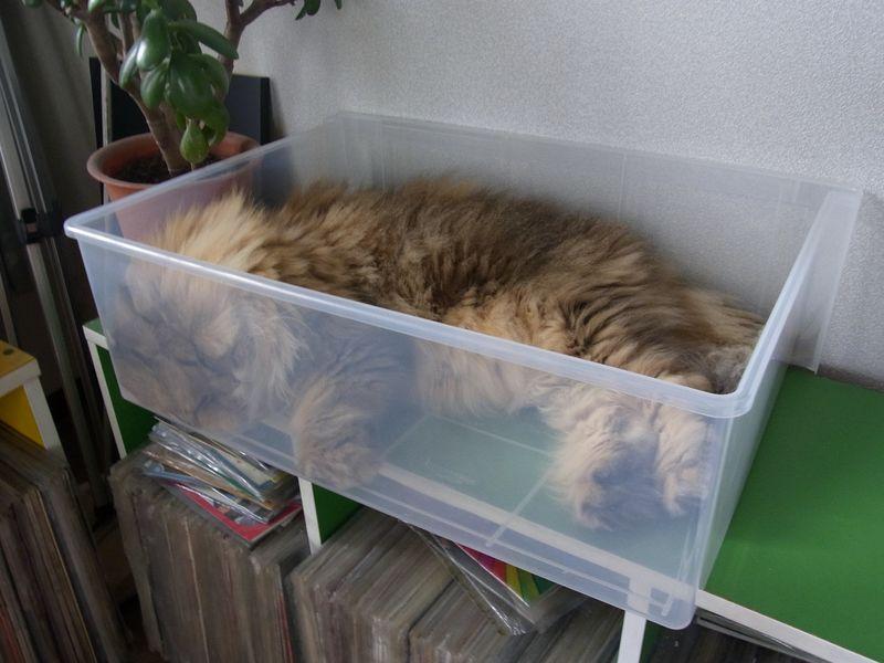 猫はプラスチックケースも好きみたい_c0025115_19355393.jpg