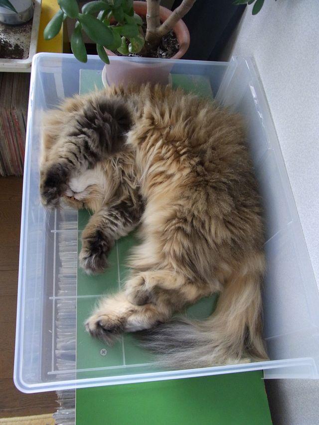 猫はプラスチックケースも好きみたい_c0025115_19355755.jpg