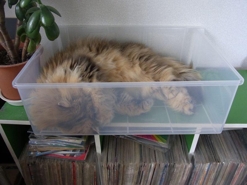 猫はプラスチックケースも好きみたい_c0025115_19361952.jpg