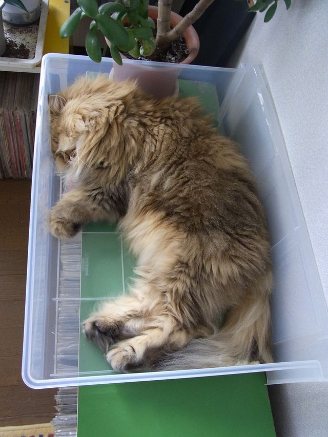 猫はプラスチックケースも好きみたい_c0025115_1936931.jpg