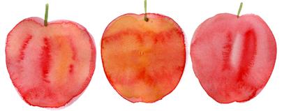 りんご_f0135024_23114947.jpg