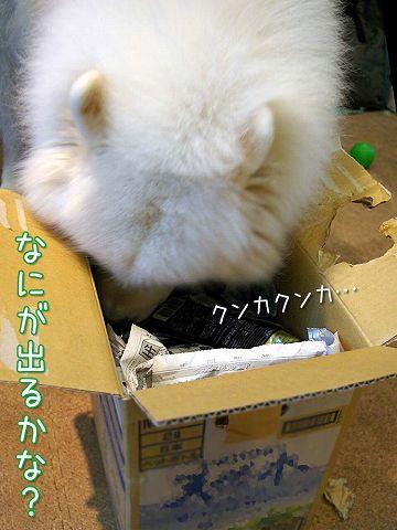 秋の味覚_c0062832_16415411.jpg