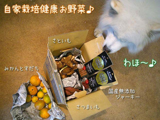 秋の味覚_c0062832_1642012.jpg