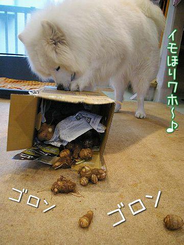 秋の味覚_c0062832_164267.jpg